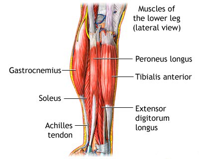 physio treatment for shin splints