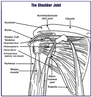 shoulder joint pain treated by physios
