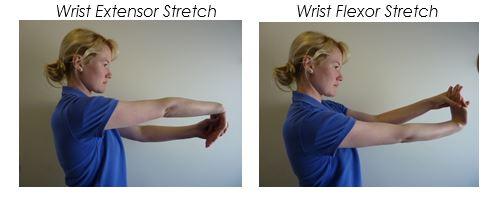 Wrist Flexor Extensor