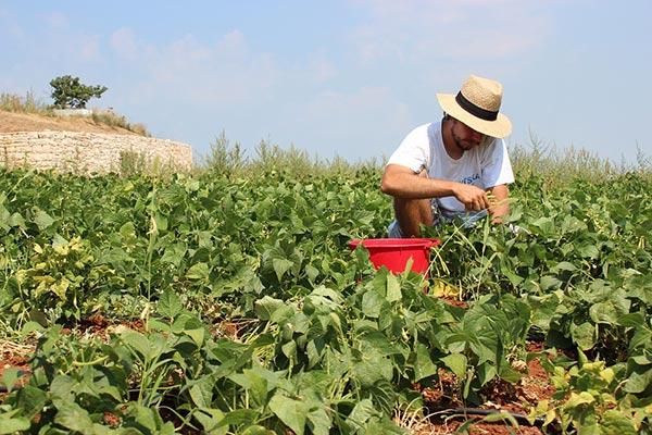 Male gardener weeding