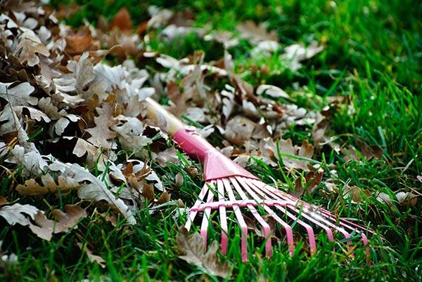 raking leaves warm up
