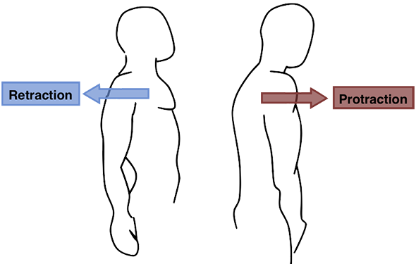 Protraction Retraction of Serratus Anterior muscle